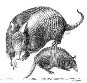 Turtle rabbit