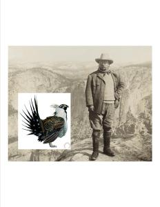 What would Teddy Roosevelt do about the sage grouse?