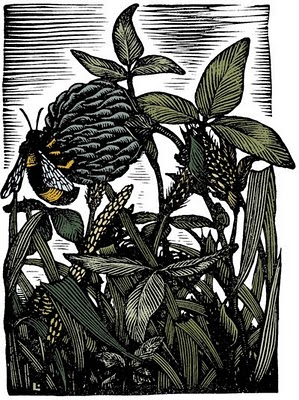 atg_jan10_woodcut-of-bee-balm